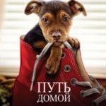 Шлях додому / A dog's Way Home (2019)