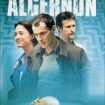 Квіти для Алджернона / Des fleurs pour Algernon (2006)